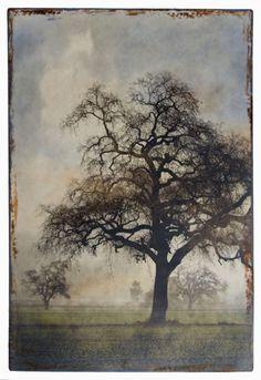 Morning Oak – encaustic image, Thea Schrack