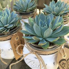 This charming DIY kit includes a hand painted & distressed Ball Mason Jar w/ a beautiful succulent* from our Premium Collection, wrapped with a twine ribbon, & succulent soil already in the jar too. Easy to put together & perfect decor for your home, dorm, office, or as a gift. (Gift tag is included upon request at check-out)  *Succulent plant may vary due to availability.  Listing includes: •1 Ball Brand Mason Jar, White w/ twine bow (Approx. size of jar only 3.5x3.5x3.5) •1 Premium rooted…
