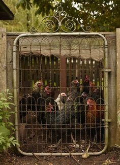 farm, rustic gate, fenc, chook coop, chicken coops, country life, gates, garden, countri