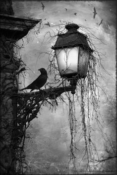 Crow on lamp post at night Dark creepy old London gothic feel. Love the hanging moss and carrion's circling in the back Art Noir, Arte Obscura, Crows Ravens, Arte Horror, Oeuvre D'art, Cool Art, Graffiti, Art Photography, Illustration Art
