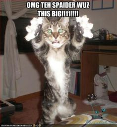 cat pics with funny captions | Bonus Pics with funny cats with captions14 Monday (03)