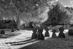 Image result for History of Infrared photography