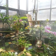One of my favorite places on #ODU's campus: the Orchid Conservatory. #iloveodu #nofilter #veganinva