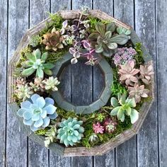 This succulent wreath frame kit provides everything you need for the perfect gift. The kit comes with succulents, design and care instructions, and redwood decorative frame. Hang on the wall or use as a table centerpiece for your home decor! Succulent Frame, Succulent Wreath, Hanging Succulents, Hanging Plants, Succulents Garden, Succulent Planters, Outdoor Table Centerpieces, Holiday Centerpieces, Garden Workshops