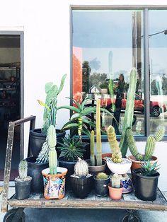 Ponderosa cactus shop in Los Angeles / sfgirlbybay