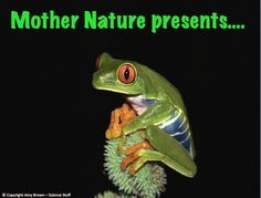 Planet Earth Awards:  Fun Facts for Your Class!!  These fun slides give awards for the biggest animal, the smallest animal, the fastest growing plant, the most disgusting camouflage, the ugliest animal, the most poisonous animal, and more! #Continguts_Animals
