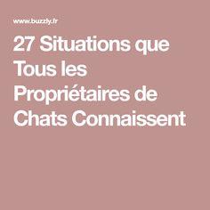 27 Situations que Tous les Propriétaires de Chats Connaissent