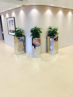 Mirror finish, square stainless steel pots with Schefflera arboricola plants used to create a sticking feature in a hospital corridor.