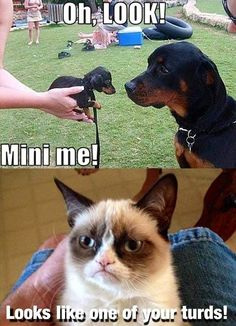 Grumpy Cat meme ...For more sarcastic humor and hilarious sarcasm visit www.bestfunnyjokes4u.com/rofl-funny-pic-of-the-day-8/