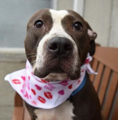 ANTONELLA - 19198 - - Brooklyn  TO BE DESTROYED 02/01/18: ****ON PUBLIC LIST**** -  Click for info & Current Status: http://nycdogs.urgentpodr.org/antonella-19198/