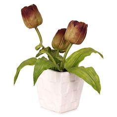 Beautiful Plants to gift someone