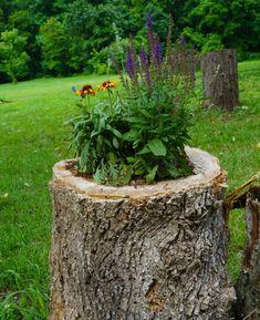 Elegant Einen Originellen Pflanztopf Aus Baumstumpf Selber Machen