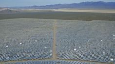 Thousands of birds are igniting mid-air. What's solar got to do with it? | Grist