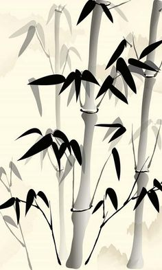 Eco chic wallpaper birch trees - once upon a time 3x08 promotional photos insurance