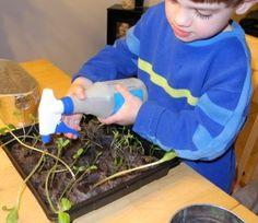 Home Vegetable Garden plan