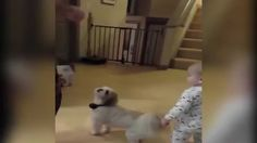 Baby copies dog for a treat - 9GAG