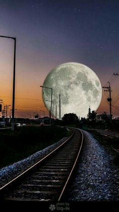 Aaron padded out onto the side of the tracks his fur gently getting rustled by the wind. He tilted his head back and let out a deep howl. (OPEN ROLEPLAY)