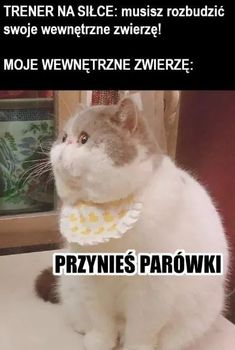 Wtf Funny, Funny Cute, Funny Animals, Cute Animals, Polish Memes, Funny Mems, Russian Memes, Fish Cat Toy, I Hate People