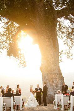 Casarse bajo un árbol.