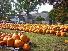3,000 pumpkins arrive in downtown Walpole MA! Details here: http://visitingnewengland.com/blog-cheap-travel/?p=4856 #pumpkin #fall