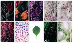 FREE FLORAL PHOTO PACK Death to The Stock Photo