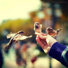 Three little birds... on my doorstep! :-)