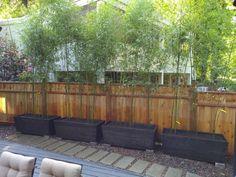 cedar planters designed for growing bamboo Bamboo Planter, Cedar Planters, Growing Bamboo, Design Concepts, Outdoor Furniture, Outdoor Decor, Garden Ideas, Backyard, Gardening