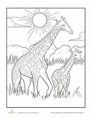 This baby giraffe coloring page features a mother and child duo strolling peacefully across the African savanna.