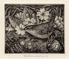 Robin Tanner - Wren and Primroses, 1935 Art And Illustration, Primroses, Black And White Drawing, Bird Pictures, Wood Engraving, Linocut Prints, Woodblock Print, Bird Art, Beautiful Birds