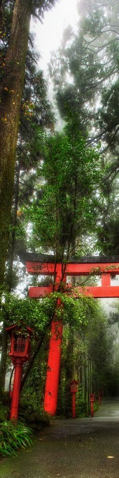 The Rainy Forest in Hakone, Japan