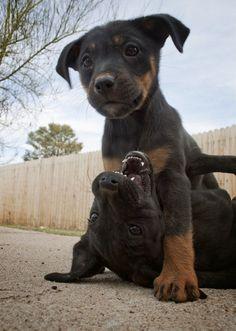 Little dogs