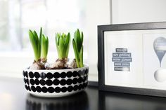 hyacinths in a marimekko bowl - photo from aniliini.blogspot.com.... hyacinths are a x-mas flower in finland.