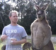 Jacked kangaroo do you even lift - photo#33