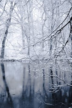 Forest in winter by SushiRee