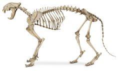 https://www.google.co.jp/search?q=spine cat