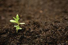 Mulch: A gardener's guide