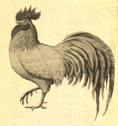 Free vintage rooster graphic. via #LuckyPalm vintage graphics