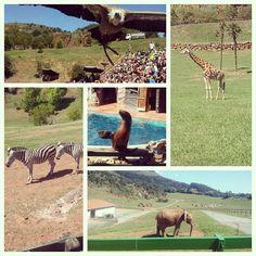Fue un gran día en Cabarceno! #cabarceno #Animals #summer
