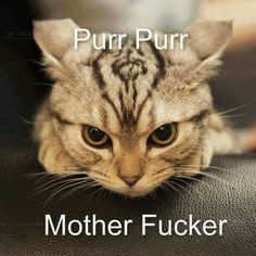Purr purr Mother Fucker