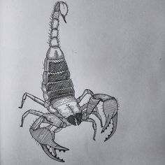 Scorpion #gdc_shu #illustration #bugs #lineart #graphicdesign by regular.john