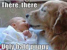 There, there... Ugly Bald Puppy!!! ;p