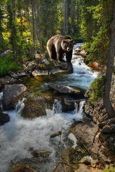 Bear out walking in beautiful scenery.  //Love this photo EL//