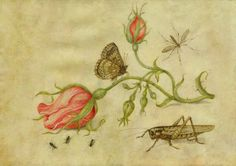 Jan Van Kessel the Elder (1626 - 1679)Still life with rose buds and insects. Tempera on vellum. 15,6 x 23 cm.