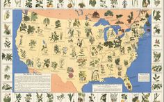 Amazing 1930's Pharmacist Map of 'Herbal Cures'