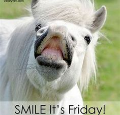 We have the Friday feeling! Horse Quotes, Horse Sayings, Funny Horses, Friday Humor, Friday Feeling, Beautiful Horses, Cheers, Animals, Smile