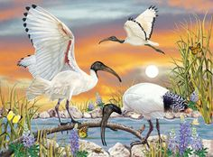 Sacred Ibis by Rosiland Solomon