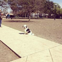 Sunny day at Madison Square Park! - San Antonio, TX - Angus Off-Leash Madison Square, Dog Park, San Antonio, Sunny Days, Cute Dogs, Parks, Texas, Puppies, Animals