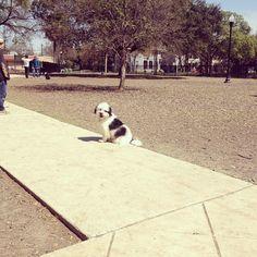 Sunny day at Madison Square Park! - San Antonio, TX - Angus Off-Leash #dogs #puppies #cutedogs #dogparks #sanantonio #texas #angusoffleash