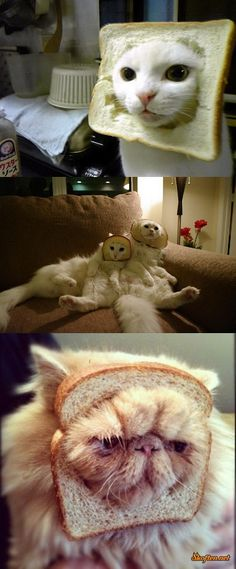 bread cats
