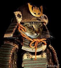 Samurai Cats - Album on Imgur